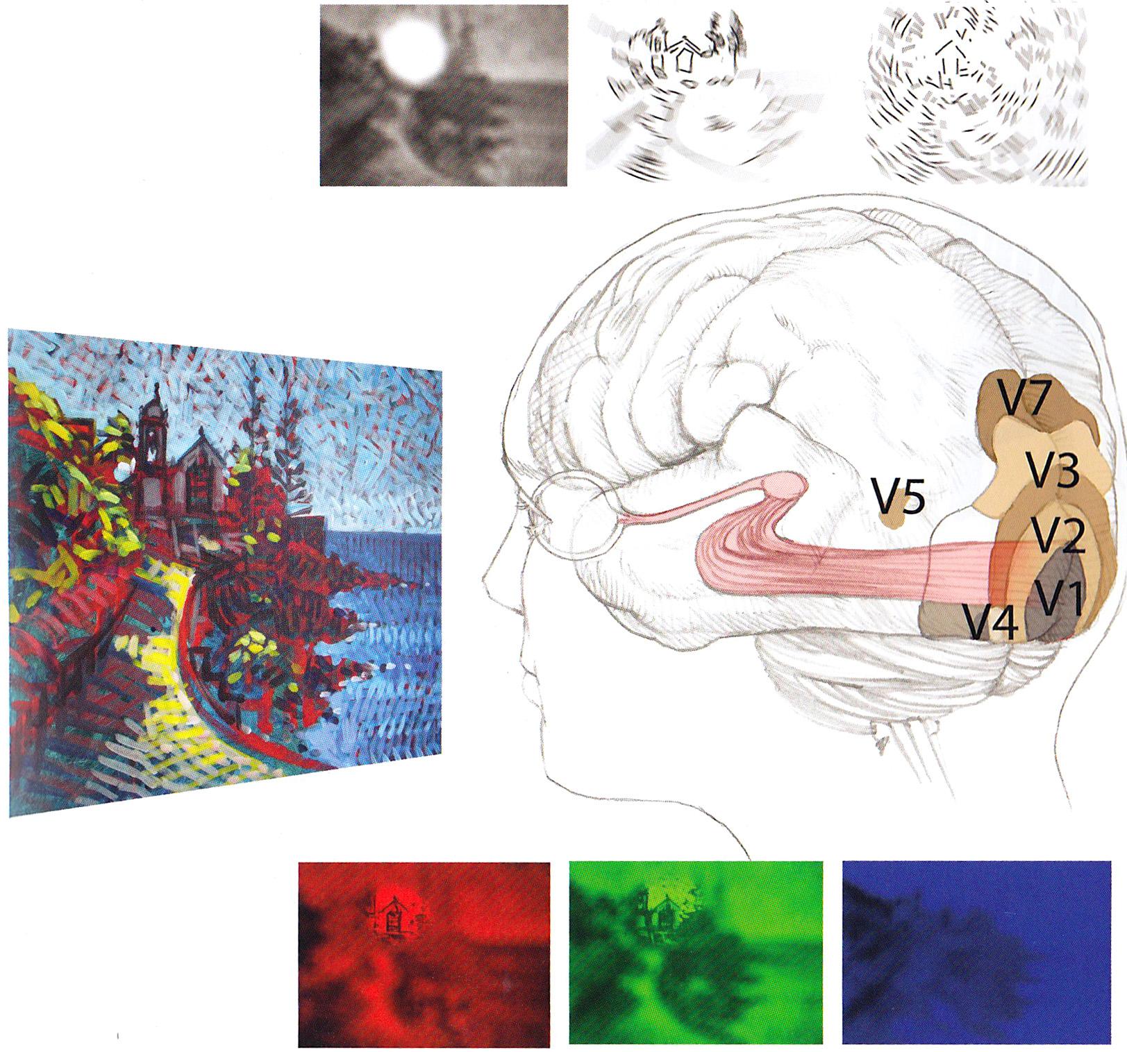beeld en hersen